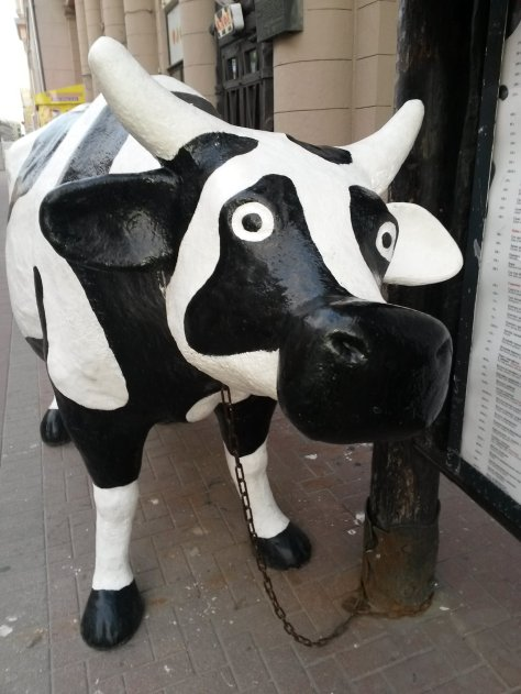 muccow (3)